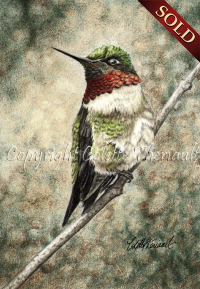ruby throated hummingbird drawing, paintings by Colette Theriault