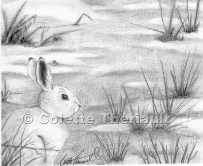 Hare Pencil Drawings Hare Rabbit Portrait Drawing