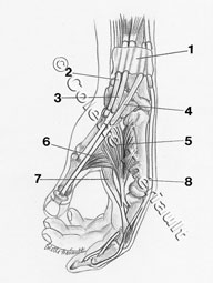 anatomy drawing by Colette Theriault