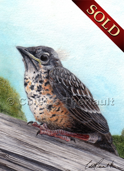robin fledgling painting