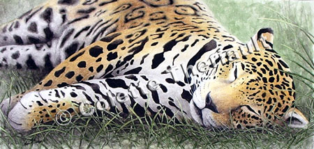 Jaguar Wildlife Painting