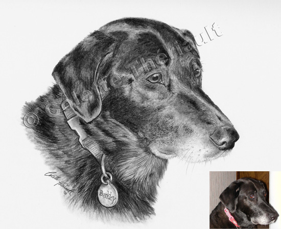 Black Labrador Retriever Drawing-Pet Portraits