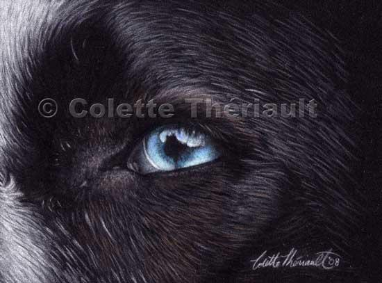 Dog eye close up  pastel painting-Pet Portraits