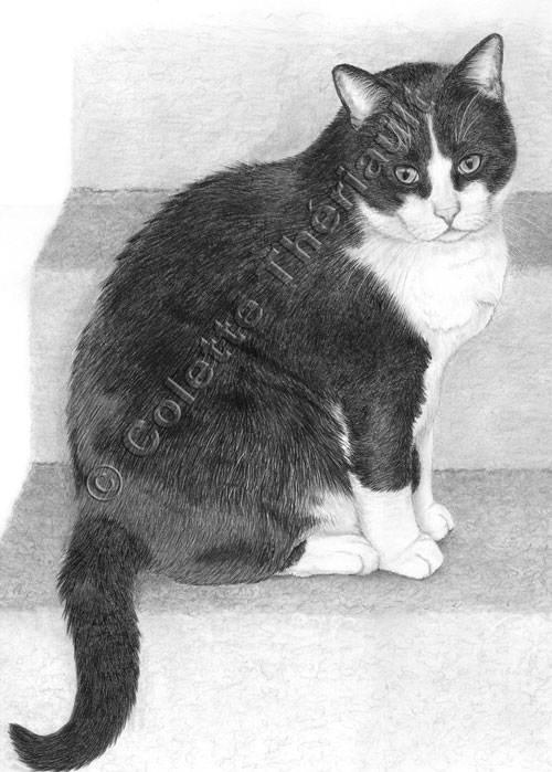 Tuxedo Cat Drawing-Pet Portraits