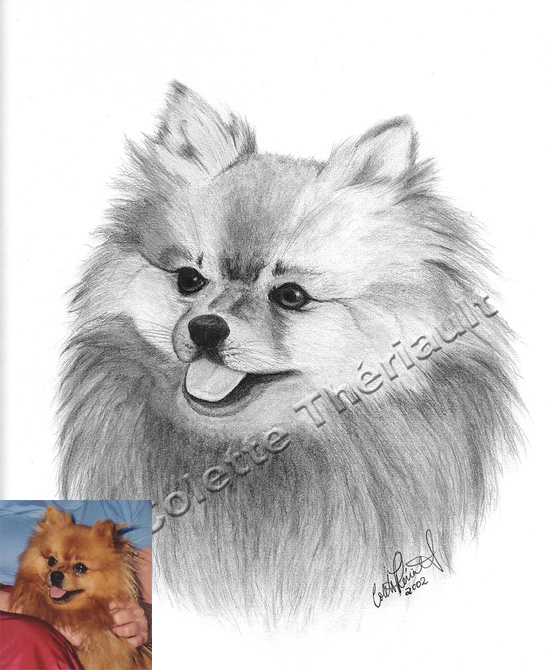 Pomeranian Drawing Pet Portrait
