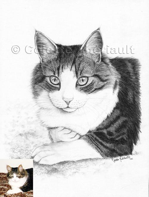 Tabby DSH Cat Pet Portraits Art