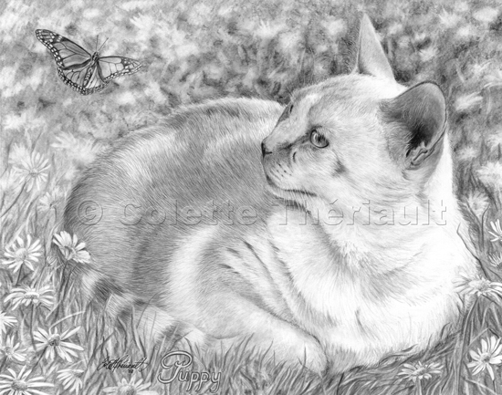 Domestic Cat Realistic Drawing-Pet Portraits