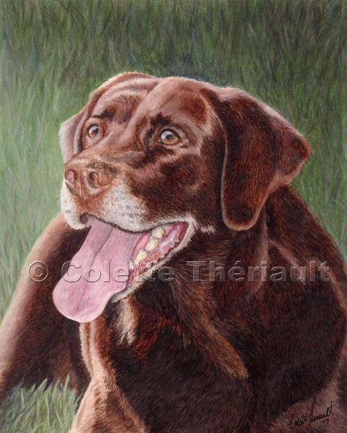 Chocolate Labrador Painting-Pet Portraits