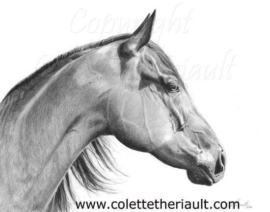 American Quarter Horse Portrait Drawing