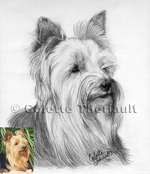 Dog Artwork Pet Portraits