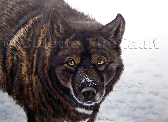 German Shepherd Akita Dog Painting-Pet Portraits
