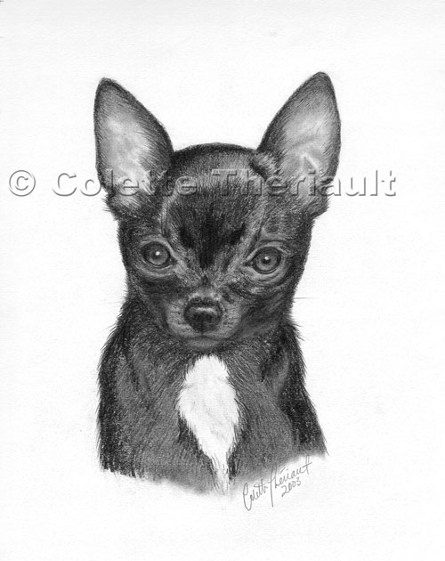 Dog Pet Portraits Art