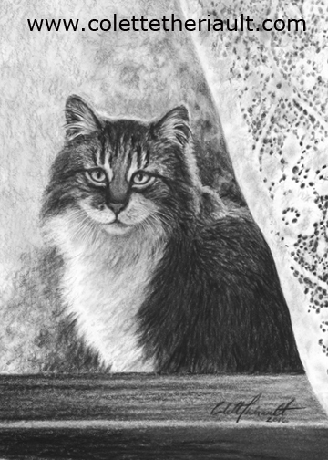 cat on windowsill drawing