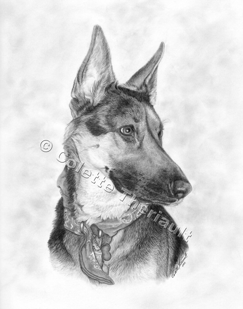 German Shepherd Dog Drawing-Pet Portraits