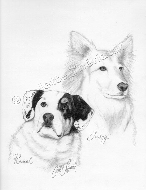 Dogs Pet Portraits