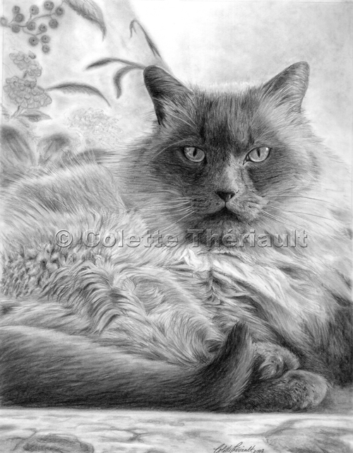 Himalayan Cat Drawing-Pet Portraits