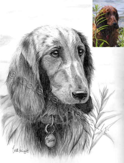 Dachshund Pet Portrait