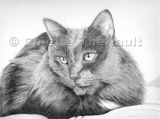 Russian Blue Cat Pet Portrait