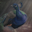 blue peacock painting pastel