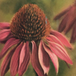 Purple coneflower painting