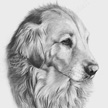 dog pencil drawings of pets dog and puppy cat and kitten horse and pony foal filly mare stallion