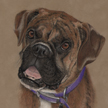 brindle boxer dog portrait pastel painting