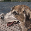 beagle mix portrait pastel painting