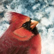 northern red cardinal painting in pastel