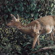 deer doe painting pastel