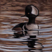 Hooded Merganser Painting