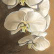 moth orchids painting