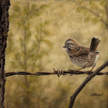 song sparrow wildife bird painting