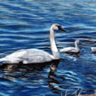 trumpeter swan family painting pastel