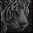 white tiger cub painting wildlife art by Colette Theriault