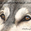 timber wolf eyes painting