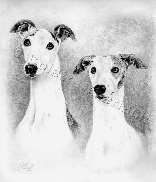 Whippet Puppy Dog Drawing-Pet Portraits