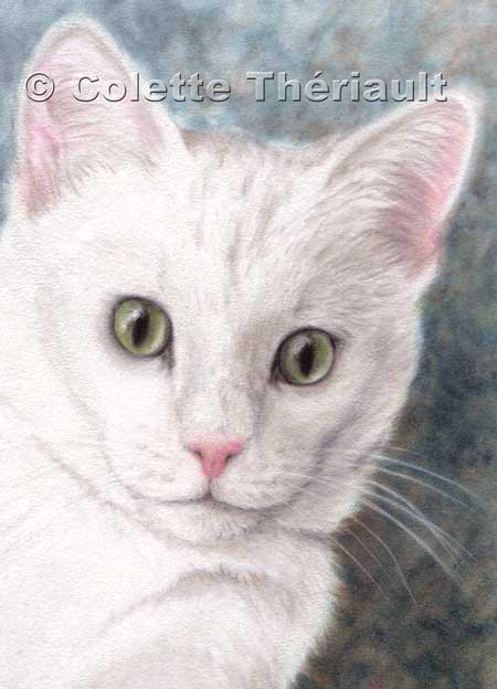 White Cat Portrait painting-pastel