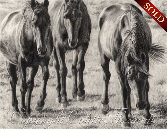 Standardbred Horse Drawing