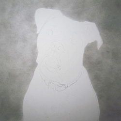 Dog Pencil Portrait Progress 1