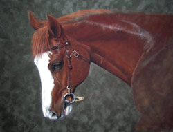 Appaloosa Pastel Painting step 3