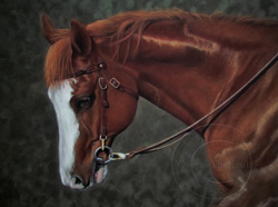 Appaloosa horse portrait step 5