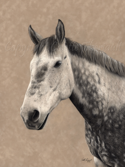 Thoroughbred cross horse portrait in pastel