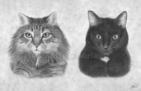 completed pet portrait of cats