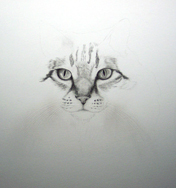 work in progress cat eyes
