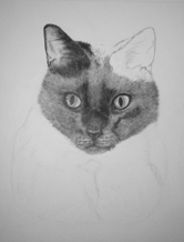work in progress cat fur