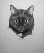 work in progress cat head