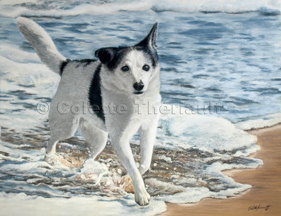 Mixed Breed  Dog pastel painting-Pet Portraits