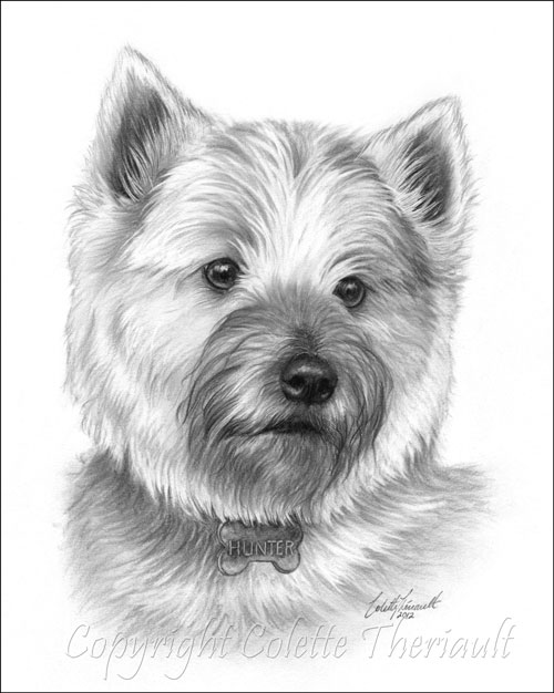 Cairn Terrier pencil drawing pet portrait