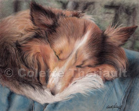 Shetland Sheepdog Pastel Painting-Pet Portraits