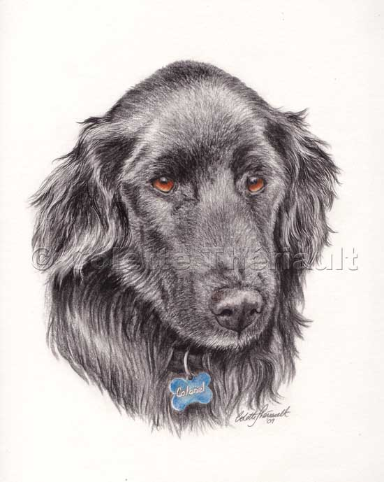 black coated retriever coloring pages - photo#21